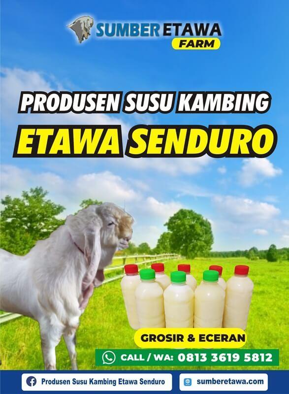 Susu Kambing Etawa Senduro