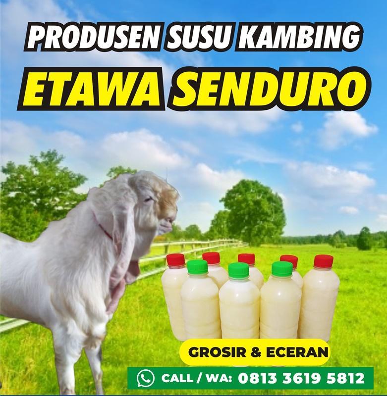 susu_kambing_etawa_senduro